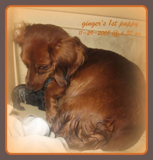 gingers-1st-pup-frame
