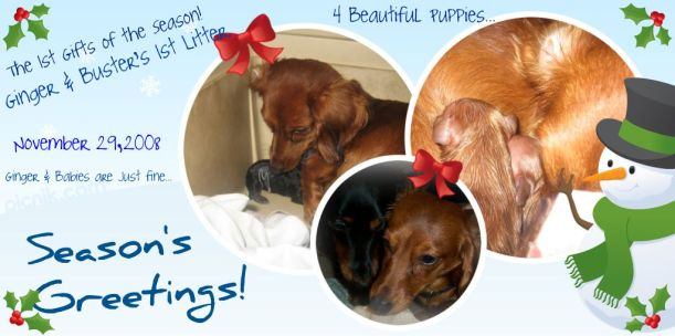 Puppy Announcement ~ November 29, 2008